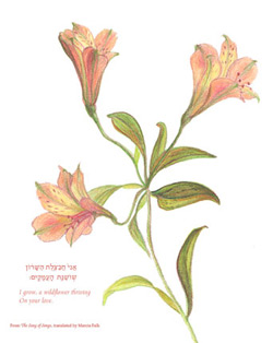 Alstroemeria Drawing   www.pixshark.com - Images Galleries ...